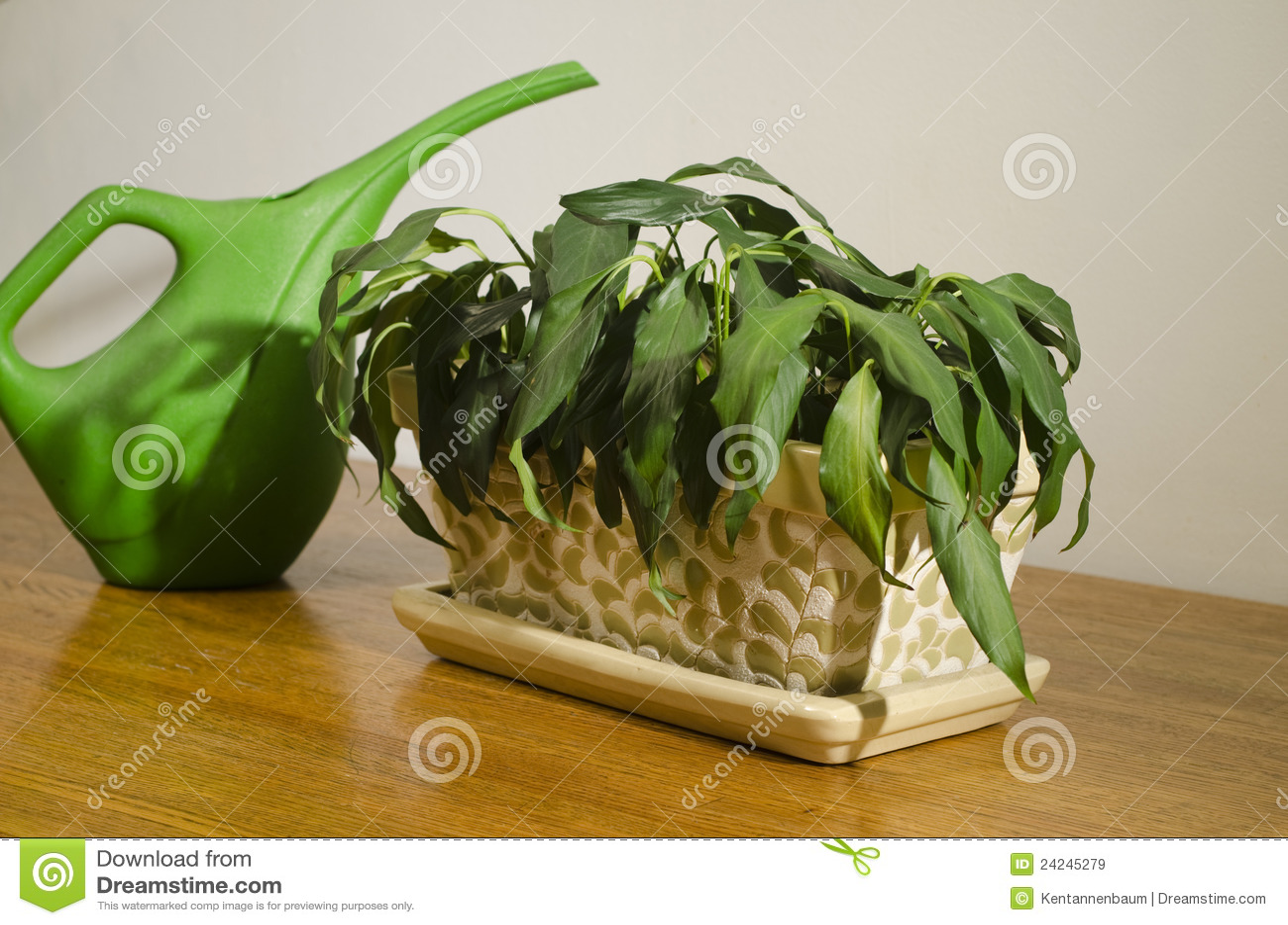 Pianta appassita della casa con pitcher 3 immagine stock for Creatore della pianta della casa