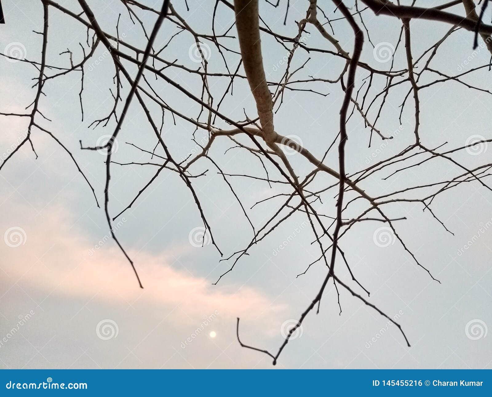 Pianta asciutta e stagioni estive drammatiche del cielo blu