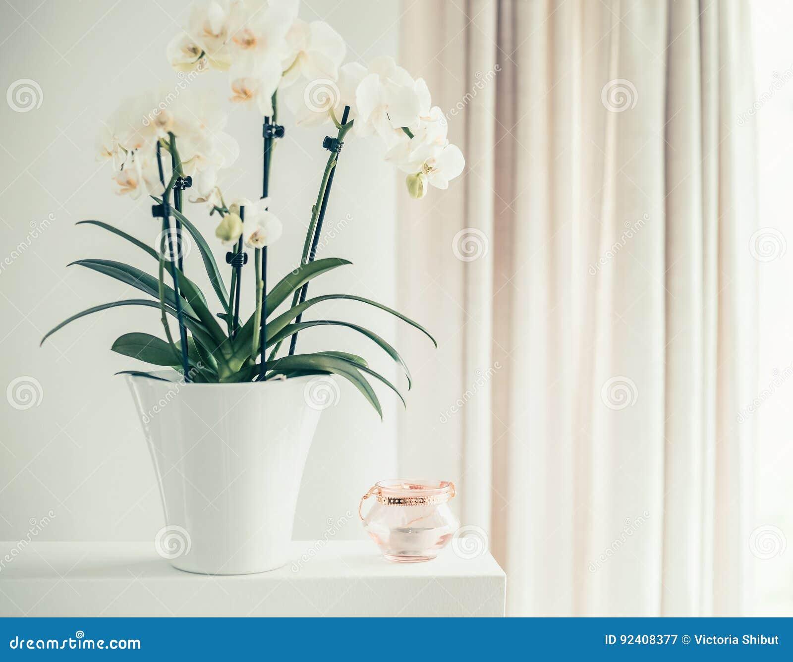 Piante Da Appartamento Orchidea.Pianta Bianca Dell Orchidea Con I Fiori In Vaso Sulla Finestra