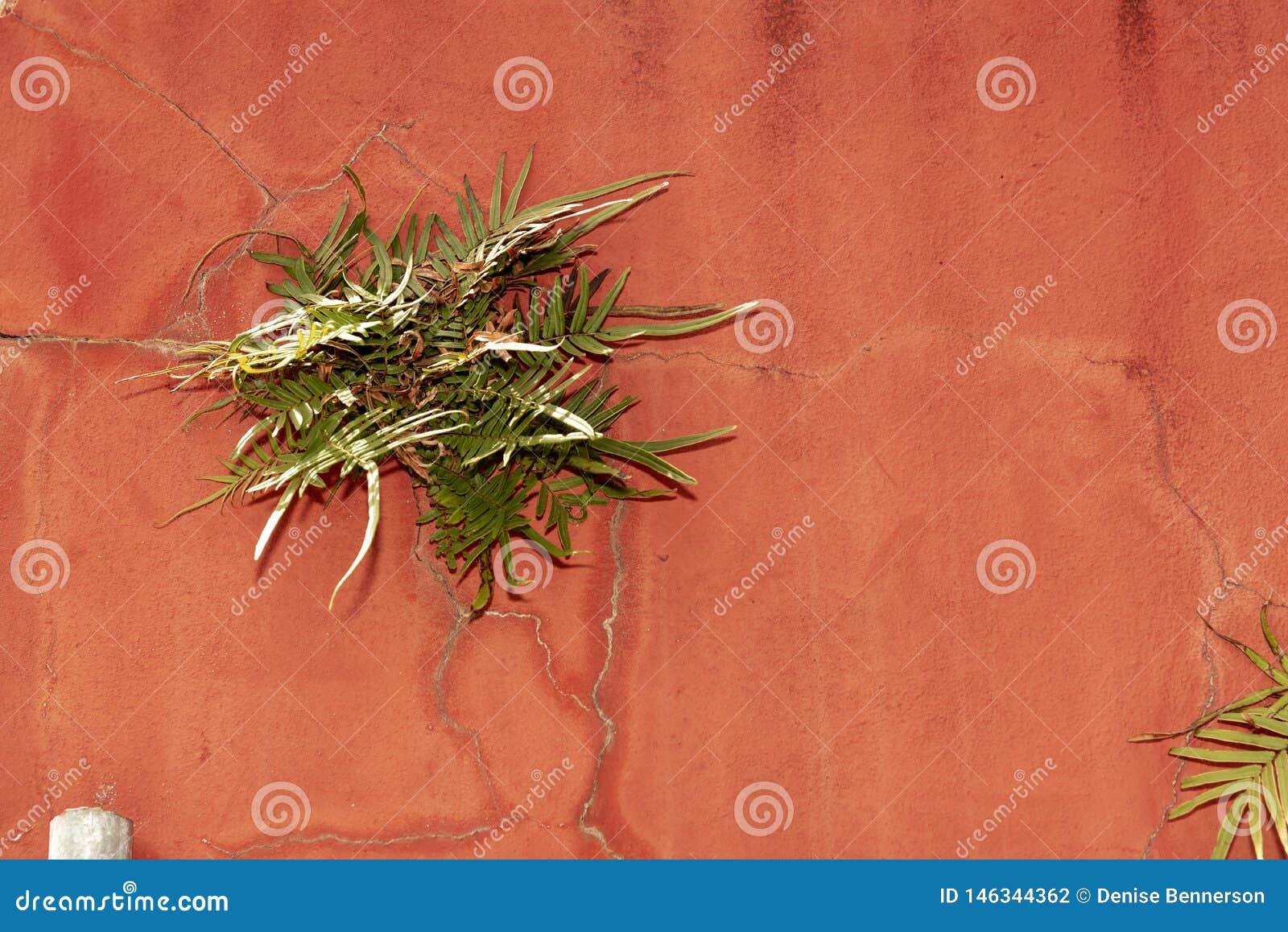 Pianta che cresce dalla parete rossa con le crepe