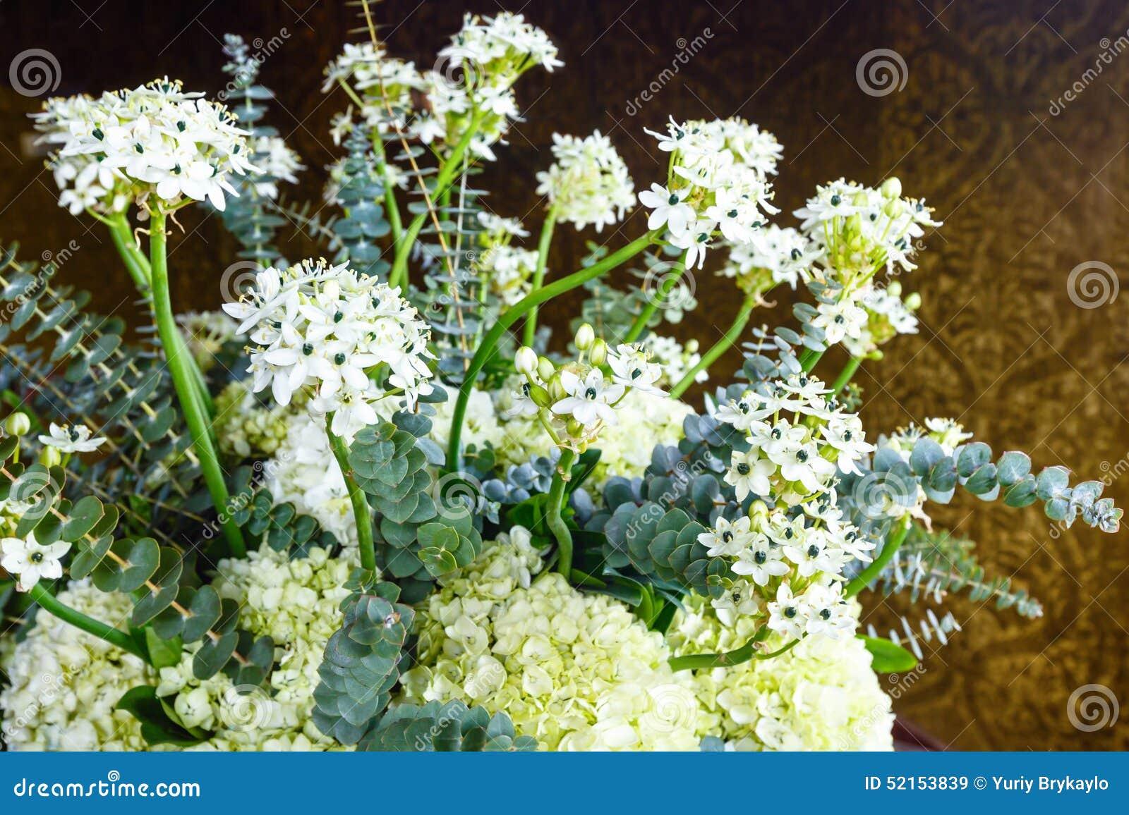 Pianta con i piccoli fiori bianchi immagine stock for Fiori piccoli bianchi