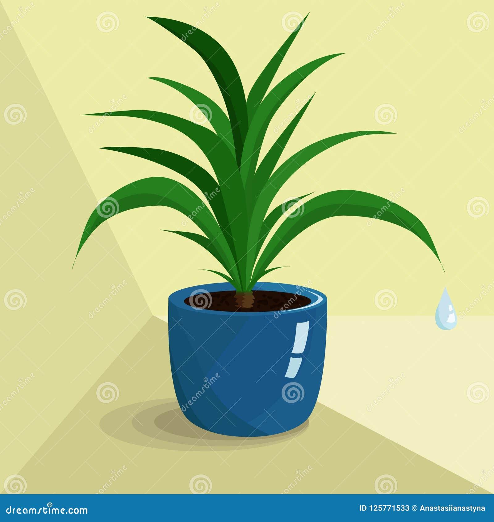 Foto Piante Da Appartamento Verdi pianta da appartamento verde in vaso blu illustrazione