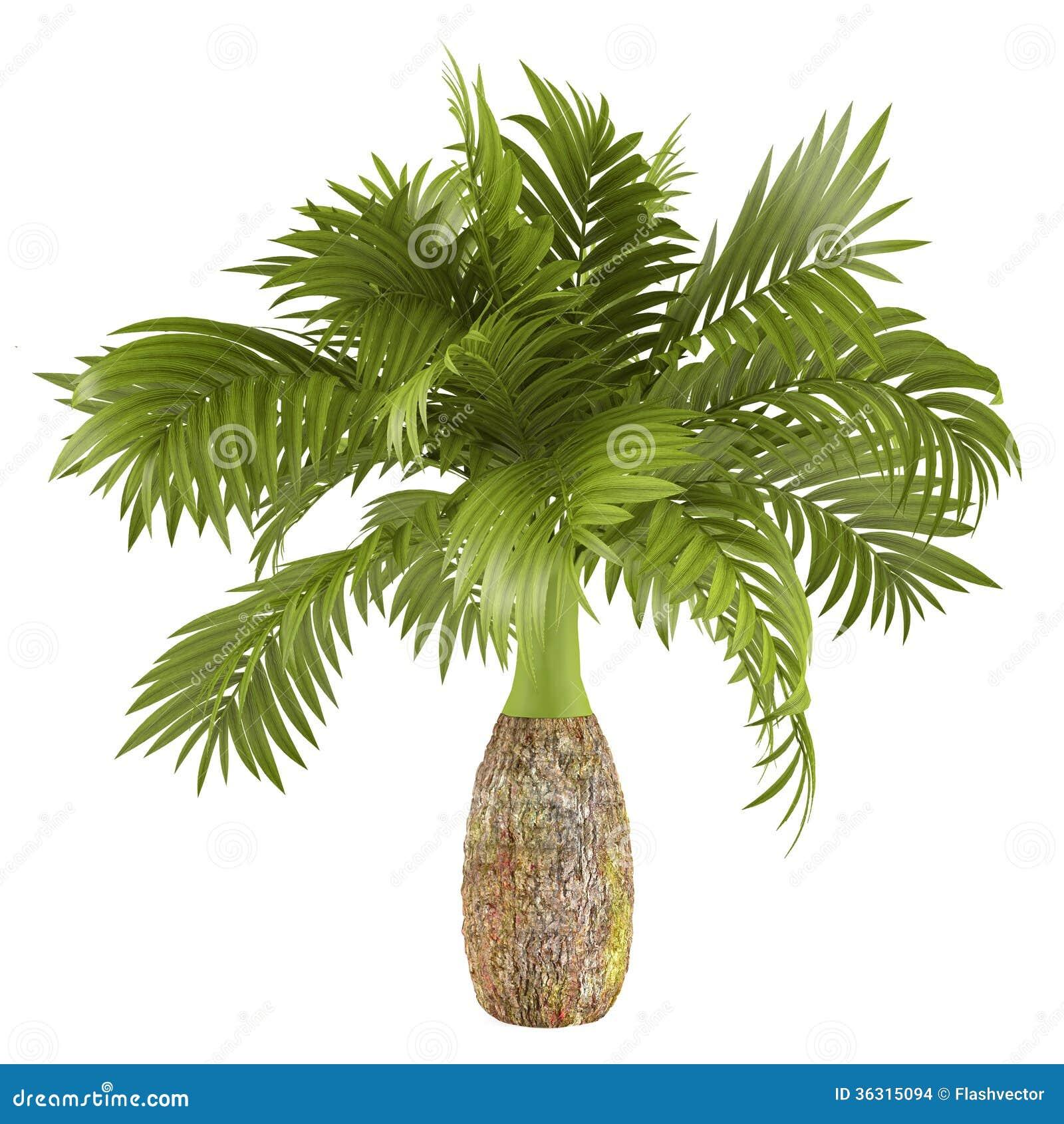 Pianta decorativa della palma illustrazione di stock for Palma pianta
