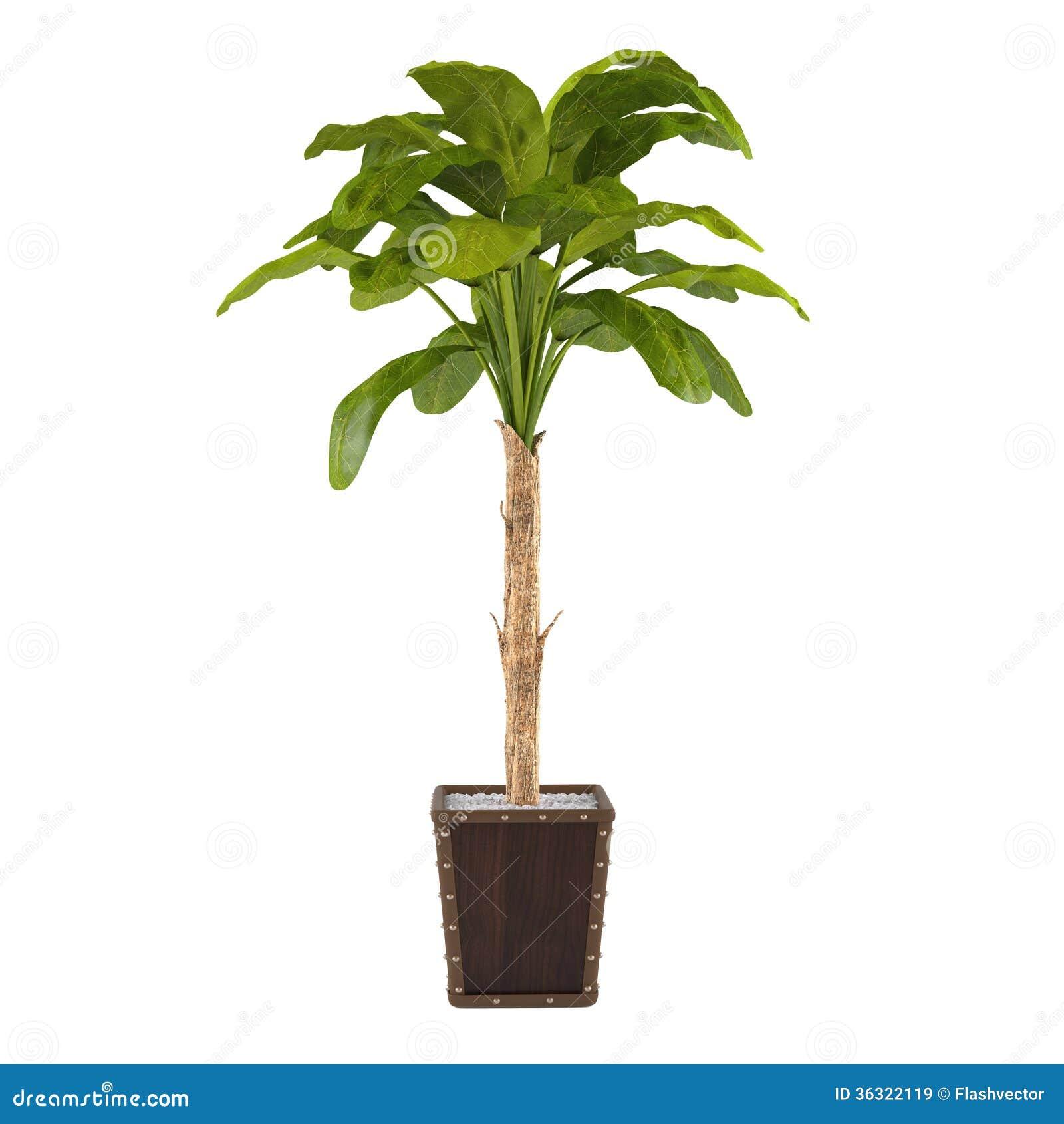 Pianta decorativa della palma nel vaso illustrazione di for Palma pianta