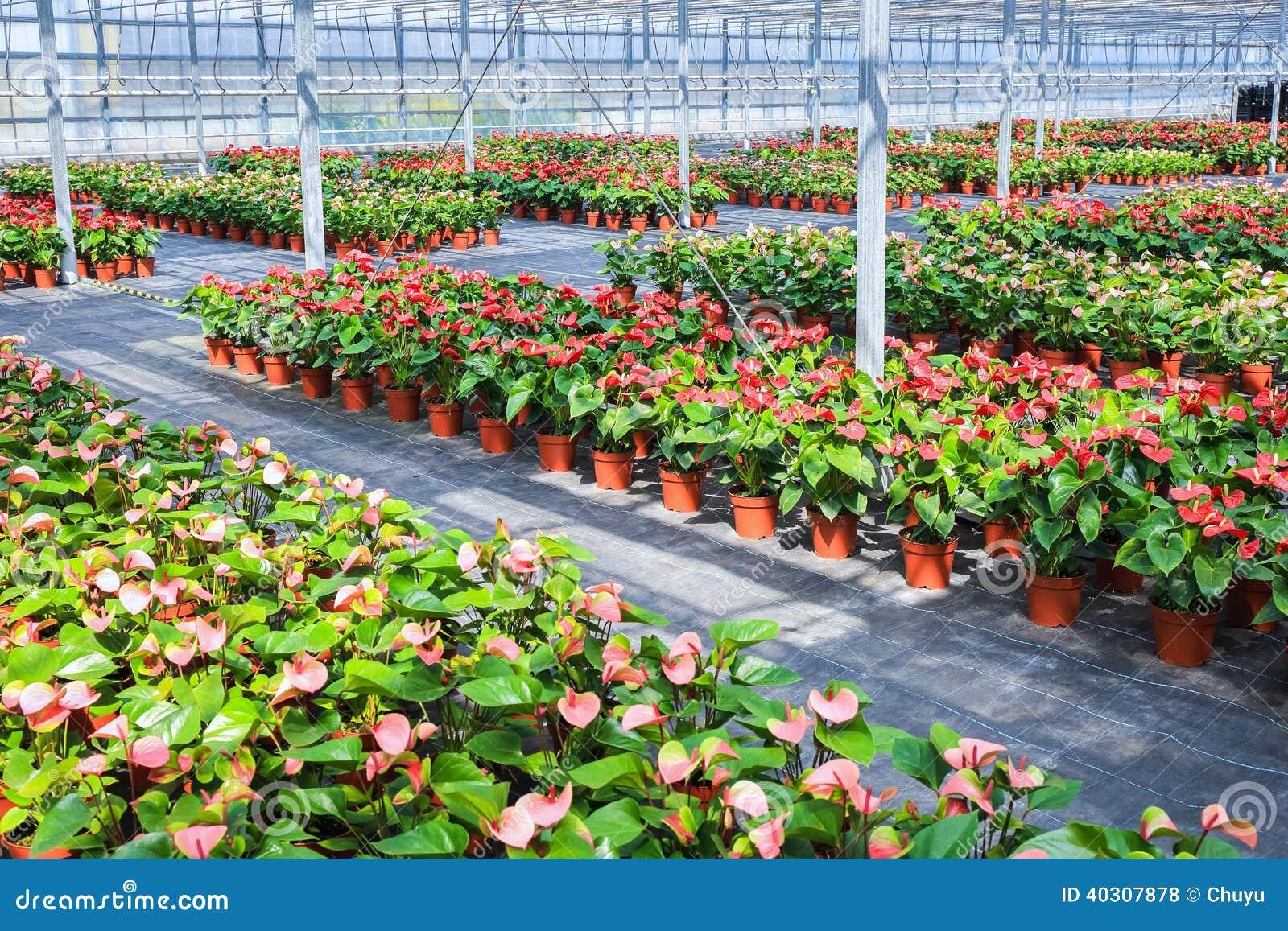 Pianta del fiore della serra fotografia stock immagine for Planimetrie della serra