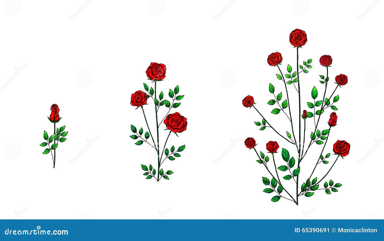 Pianta del fiore di Rosa illustrazione di stock ...