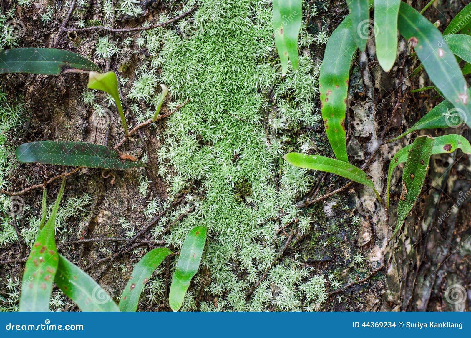 Pianta del parassita sull albero
