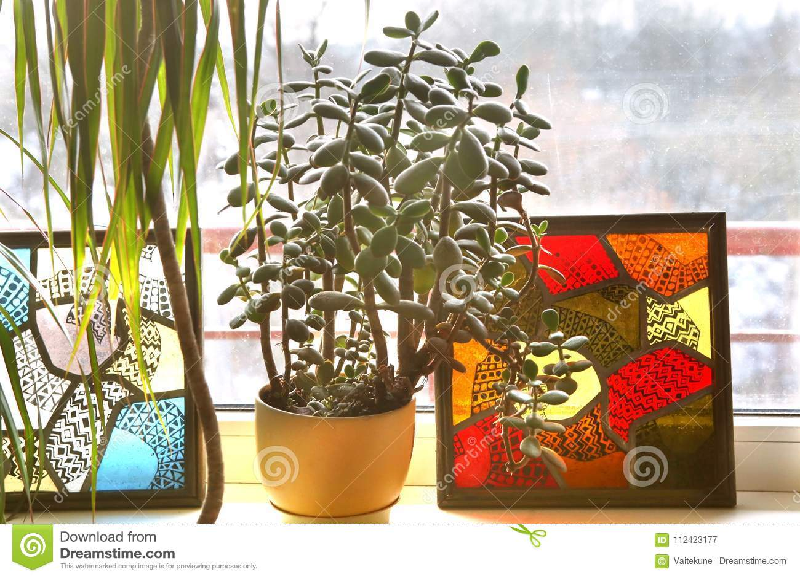 Albero Della Fortuna Pianta pianta della giada sul davanzale immagine stock - immagine