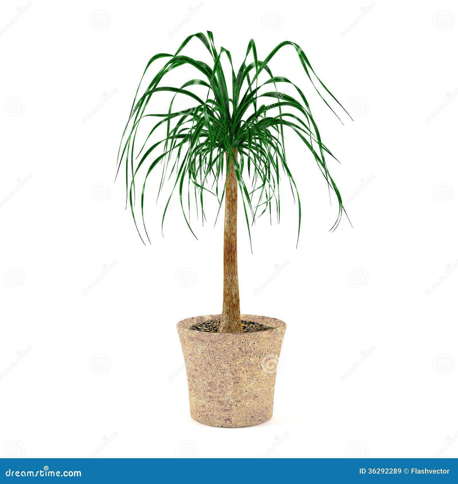 Pianta della palma nel vaso illustrazione di stock for Palma pianta