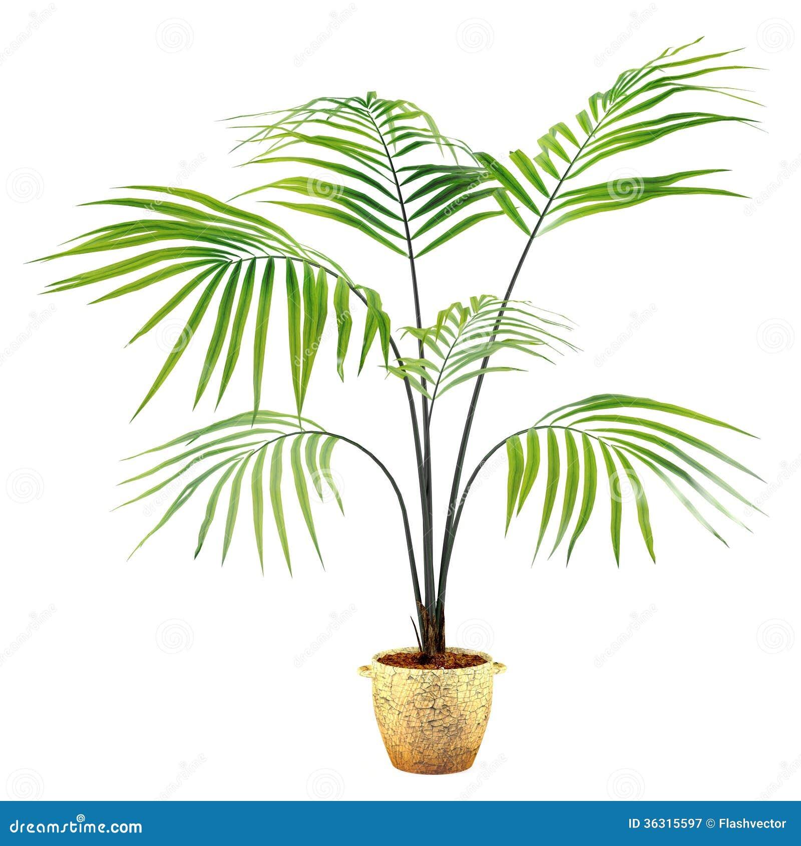 Pianta della palma nel vaso fotografia stock libera da for Palma pianta