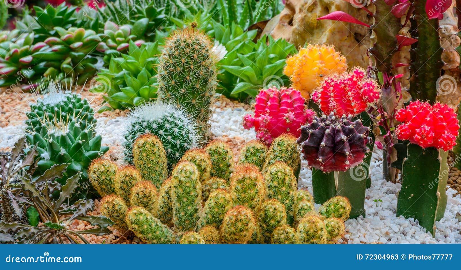 Pianta di deserto del cactus in un giardino botanico for Pianta cactus