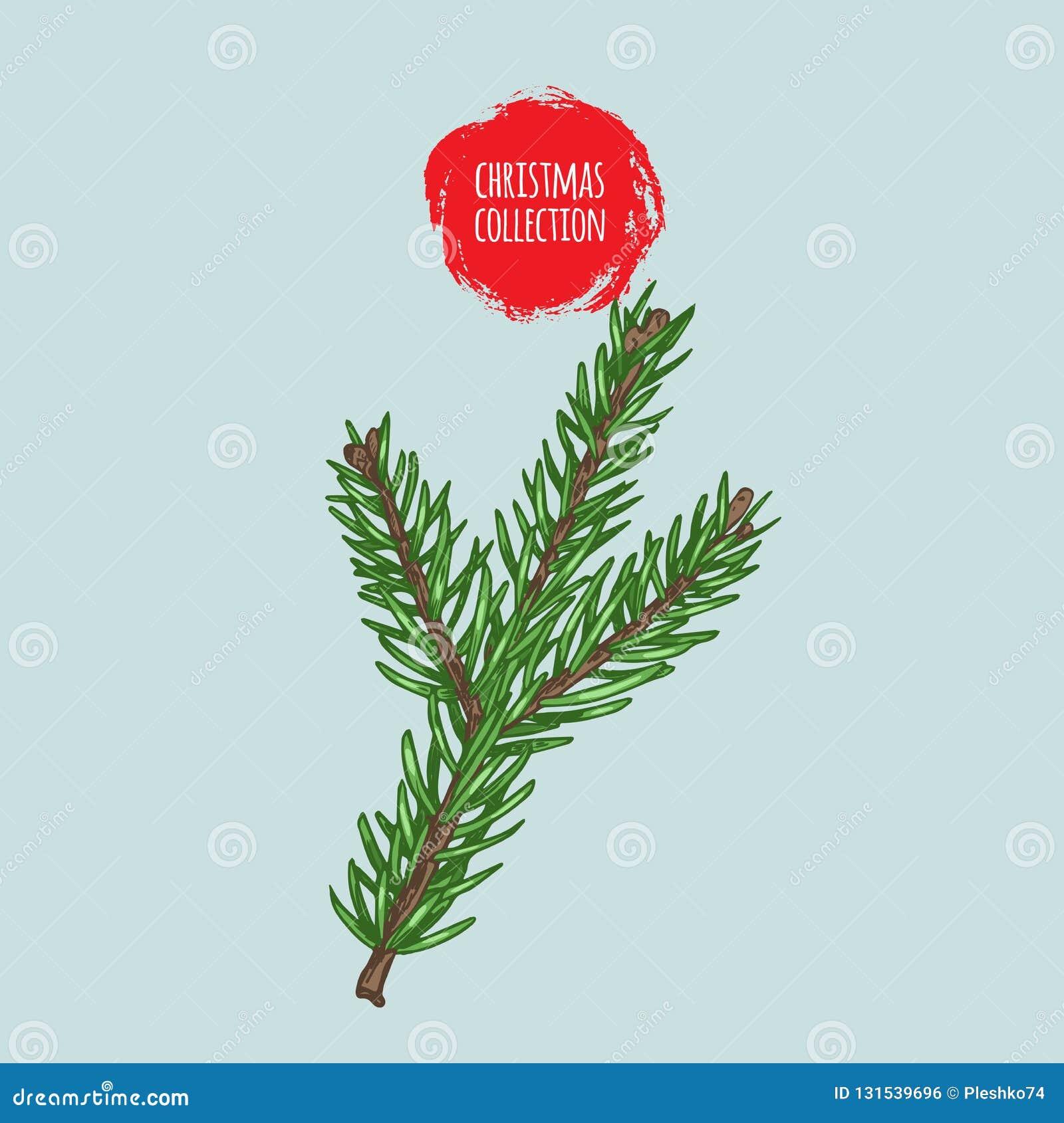 Pianta Di Natale Ramo Di Albero Variopinto Dell Abete Schizzi Il