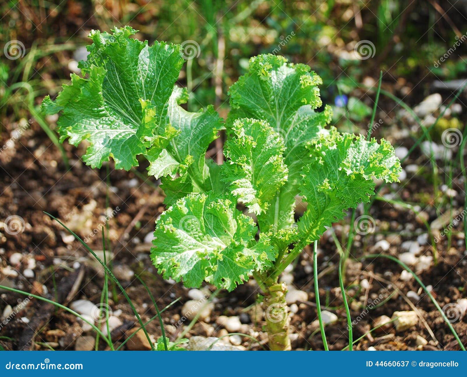 Pianta di wave verde fotografia stock immagine 44660637 for Pianta di more