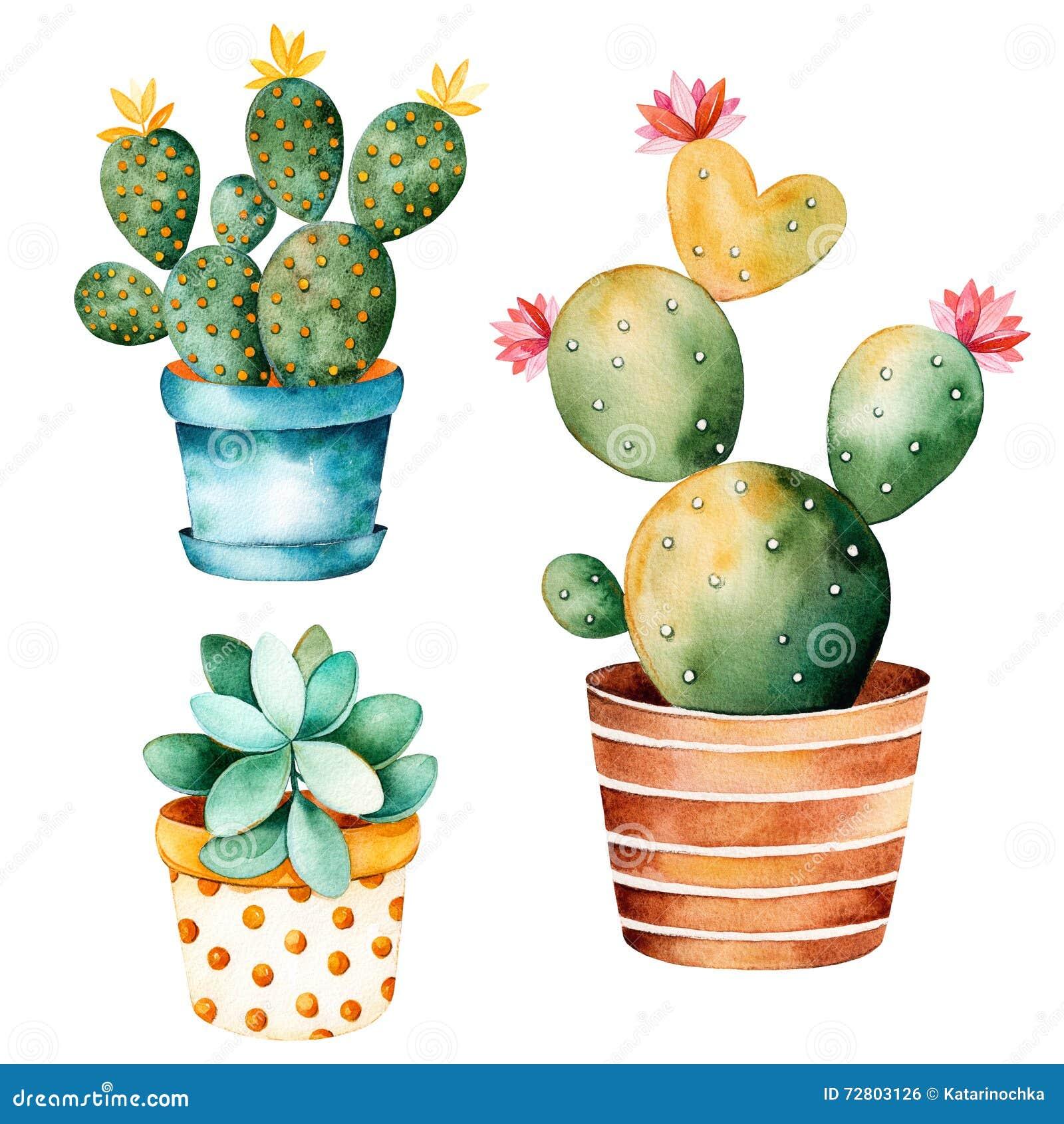 Pianta dipinta a mano del cactus dell acquerello e pianta del succulente in vaso
