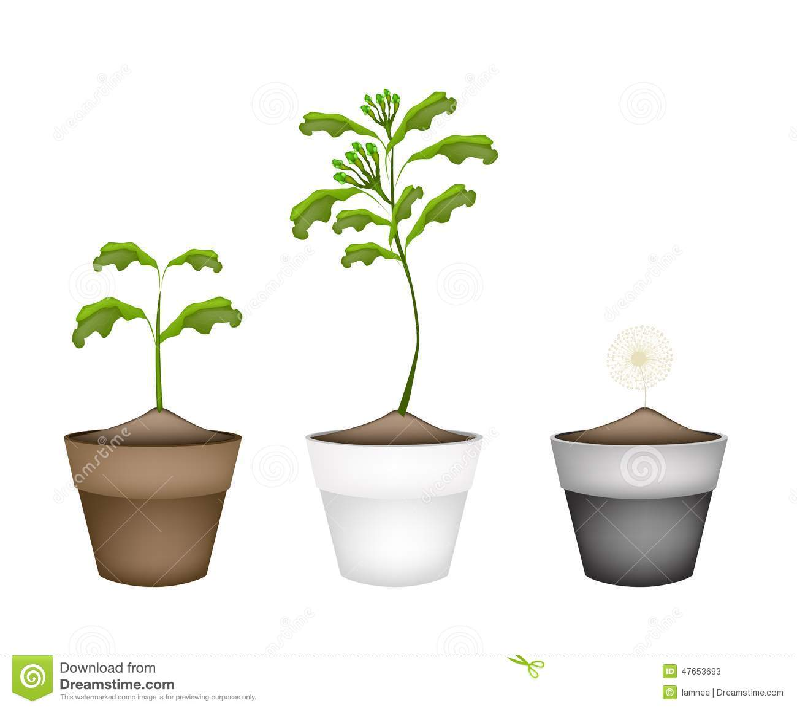 Pianta fresca del chiodo di garofano in vasi da fiori for Vasi erba