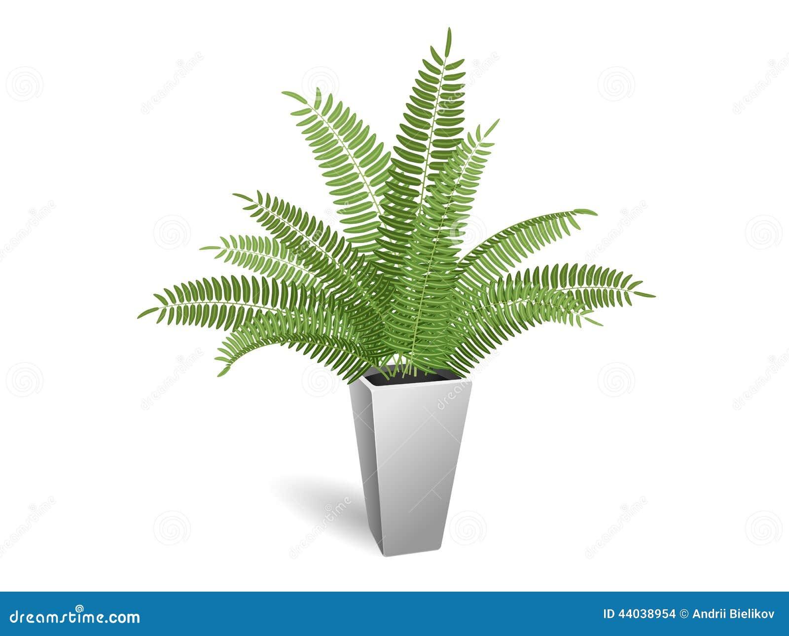 Pianta ornamentale felce in un pot illustrazione di stock - La felce pianta ...