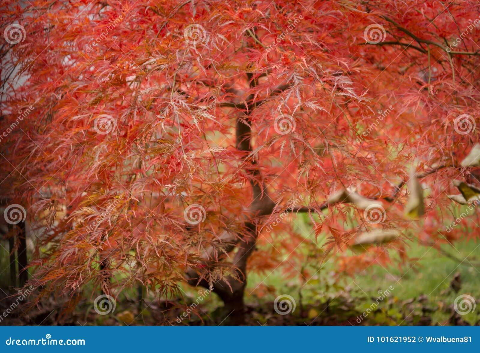 Pianta rossa meravigliosa