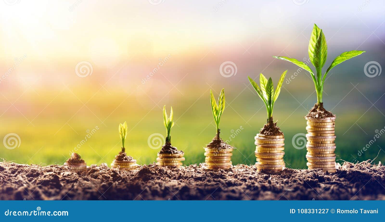 Pianta soldi crescente sulle monete