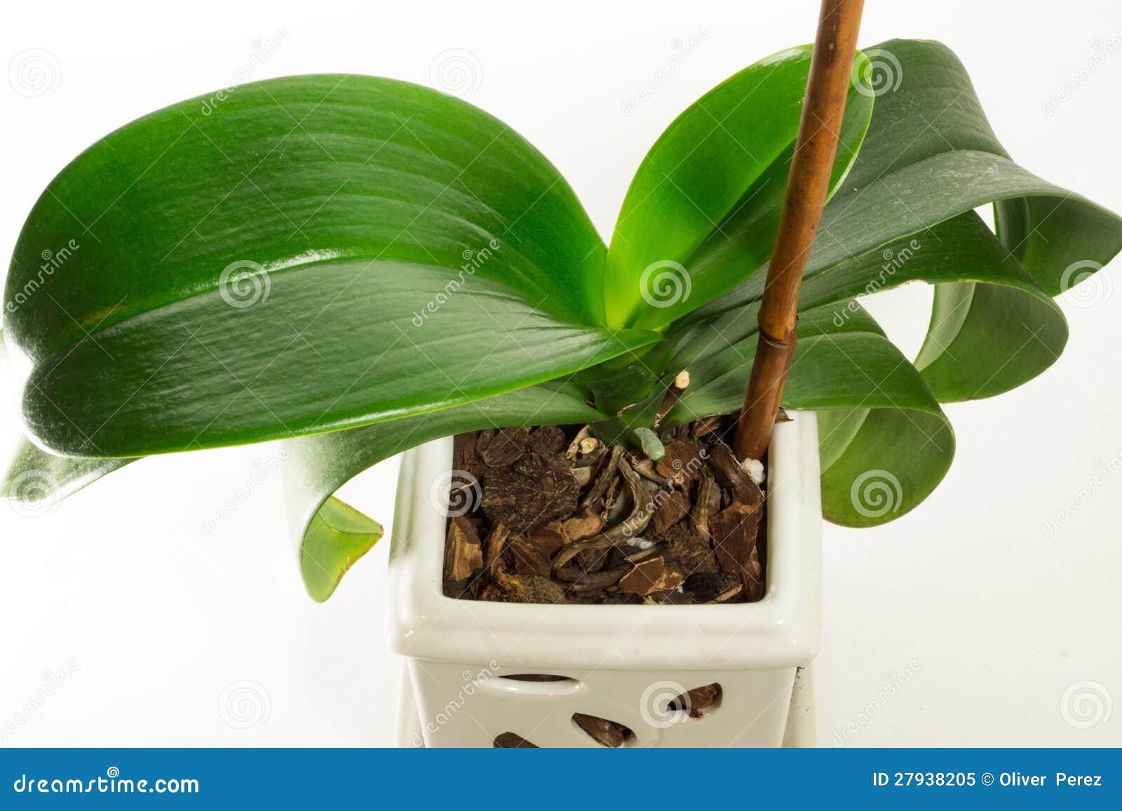 Pianta verde immagine stock immagine di crescere for Pianta da pavimento verde