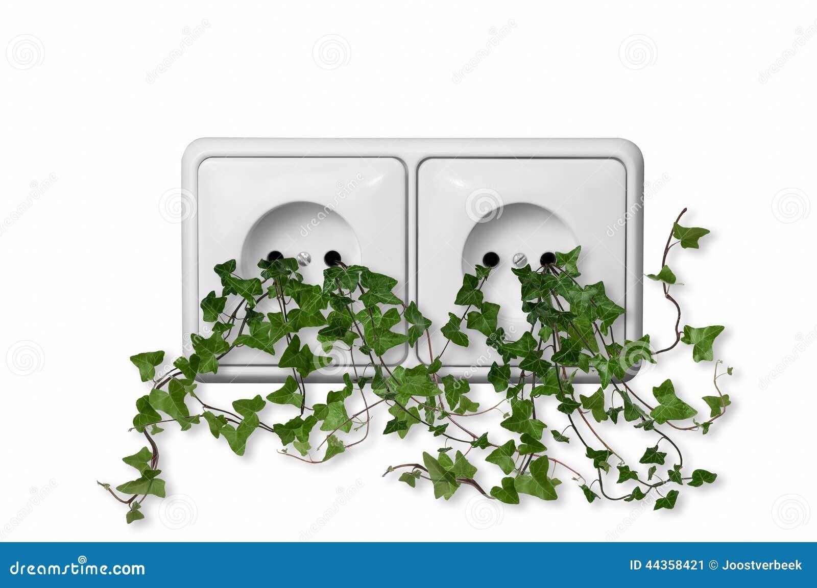 Pianta verde che cresce dallo sbocco di parete