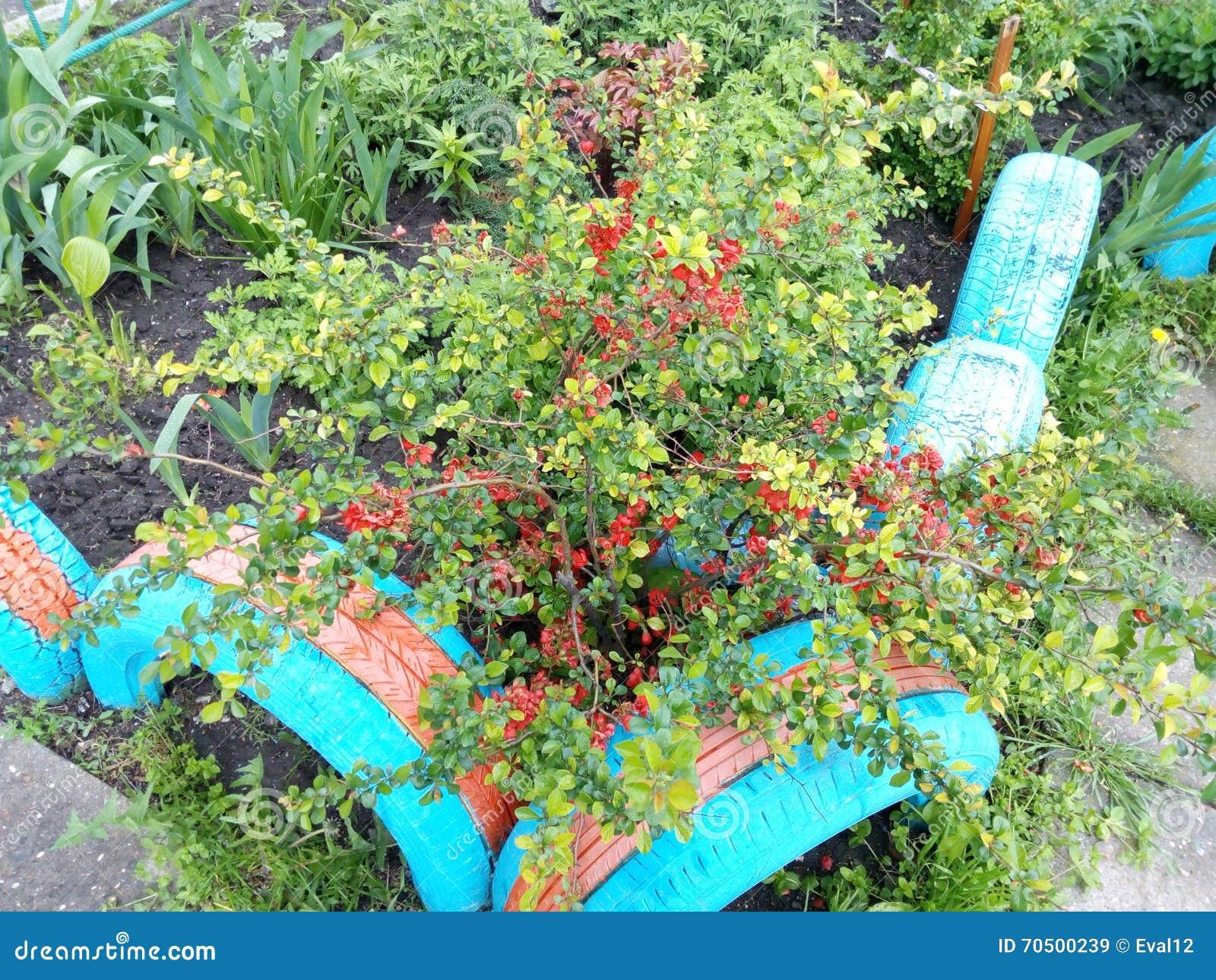 Pianta verde del cespuglio della molla con i fiori rossi for Pianta con fiori rossi