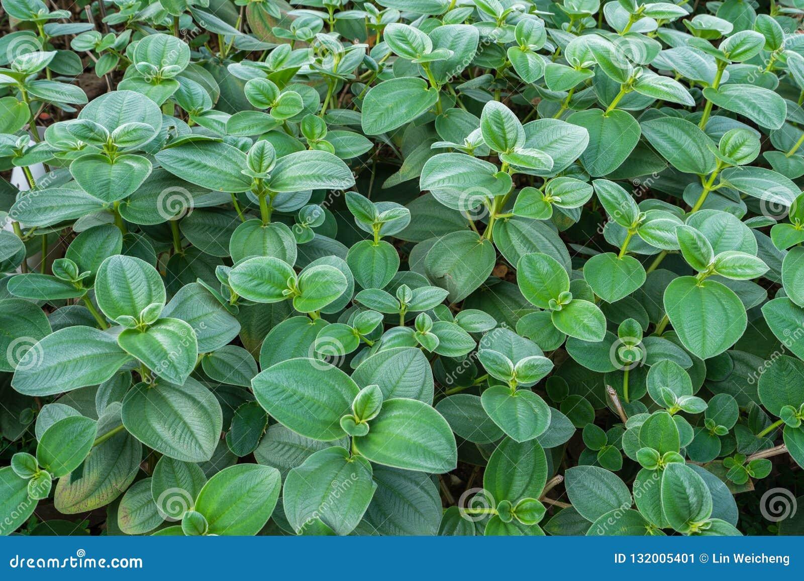 Pianta verde fertile luminosa selvatica
