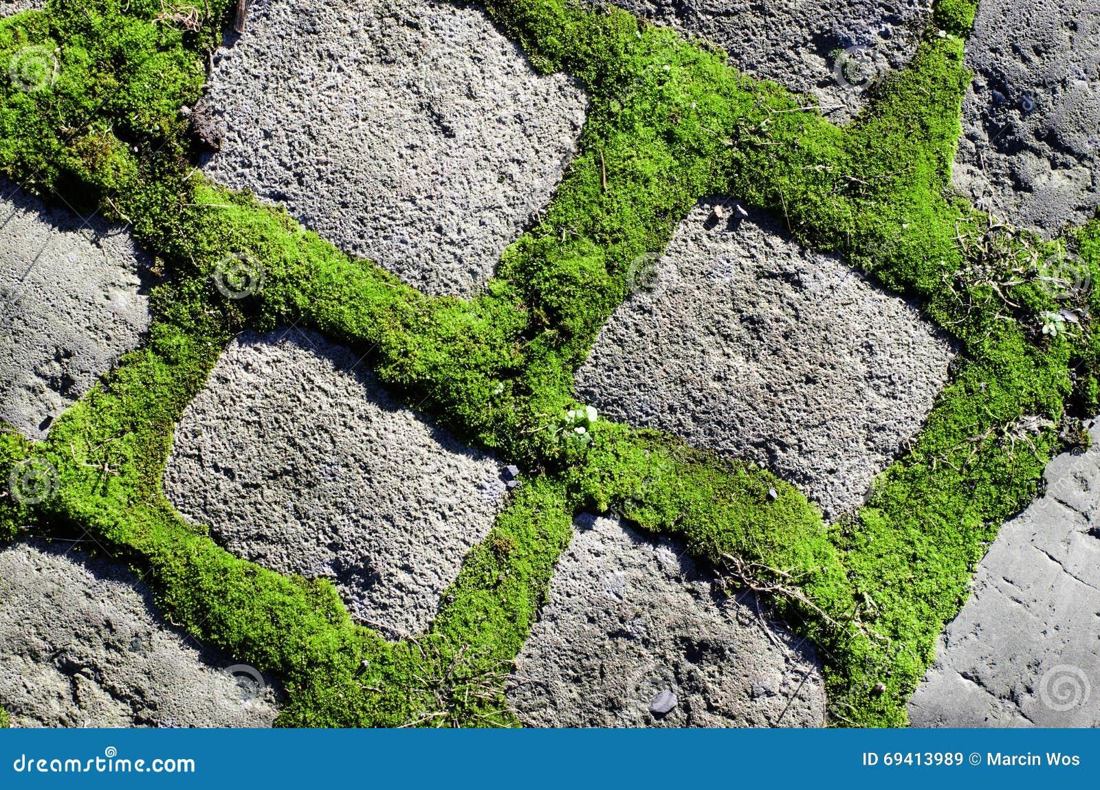 Pianta verde fra il fondo dei mattoni del cemento percorso di pietra del giardino immagine stock - Camminamento pietra giardino ...