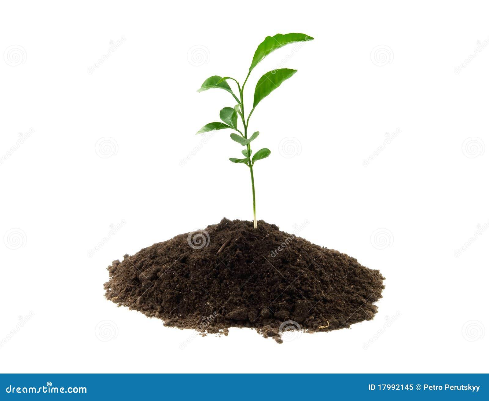 Pianta verde giovane immagine stock immagine di for Pianta da pavimento verde