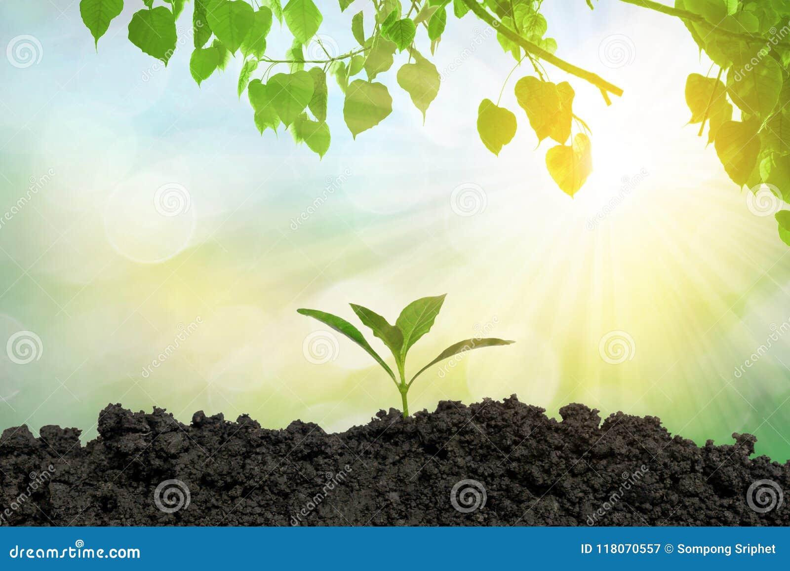 Piantando gli alberi nella terra l ambiente e l ecologia