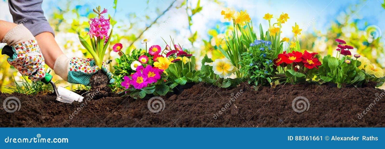 Piantatura dei fiori in un giardino