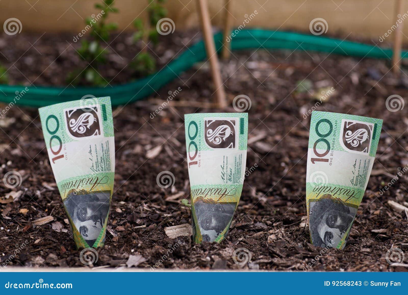Piantatura dei soldi australiani nel letto del giardino