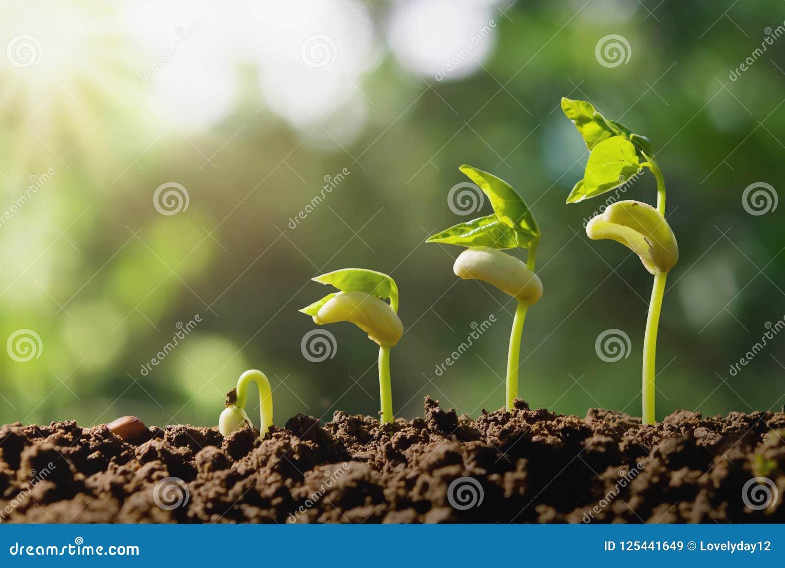 Piantatura del punto crescente con il fondo verde della natura