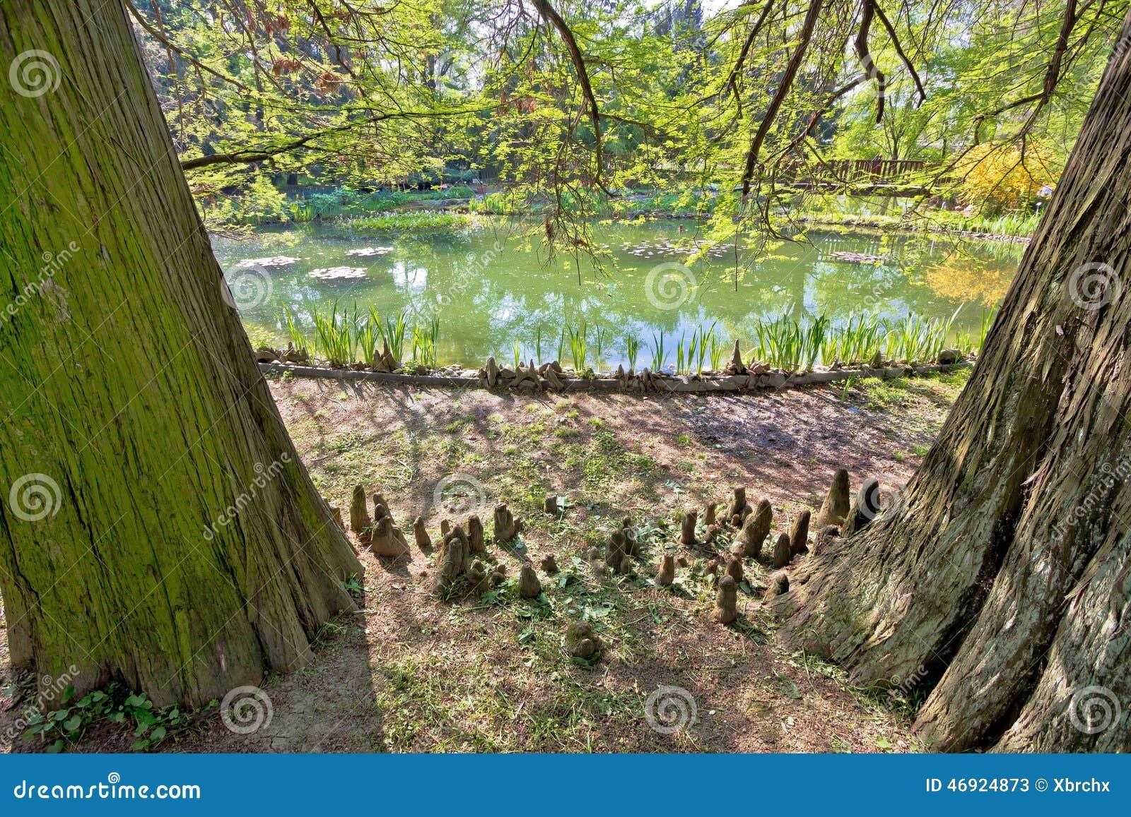 Piante alberi e lago del giardino botanico di zagabria fotografia stock immagine 46924873 - Piante e alberi da giardino ...