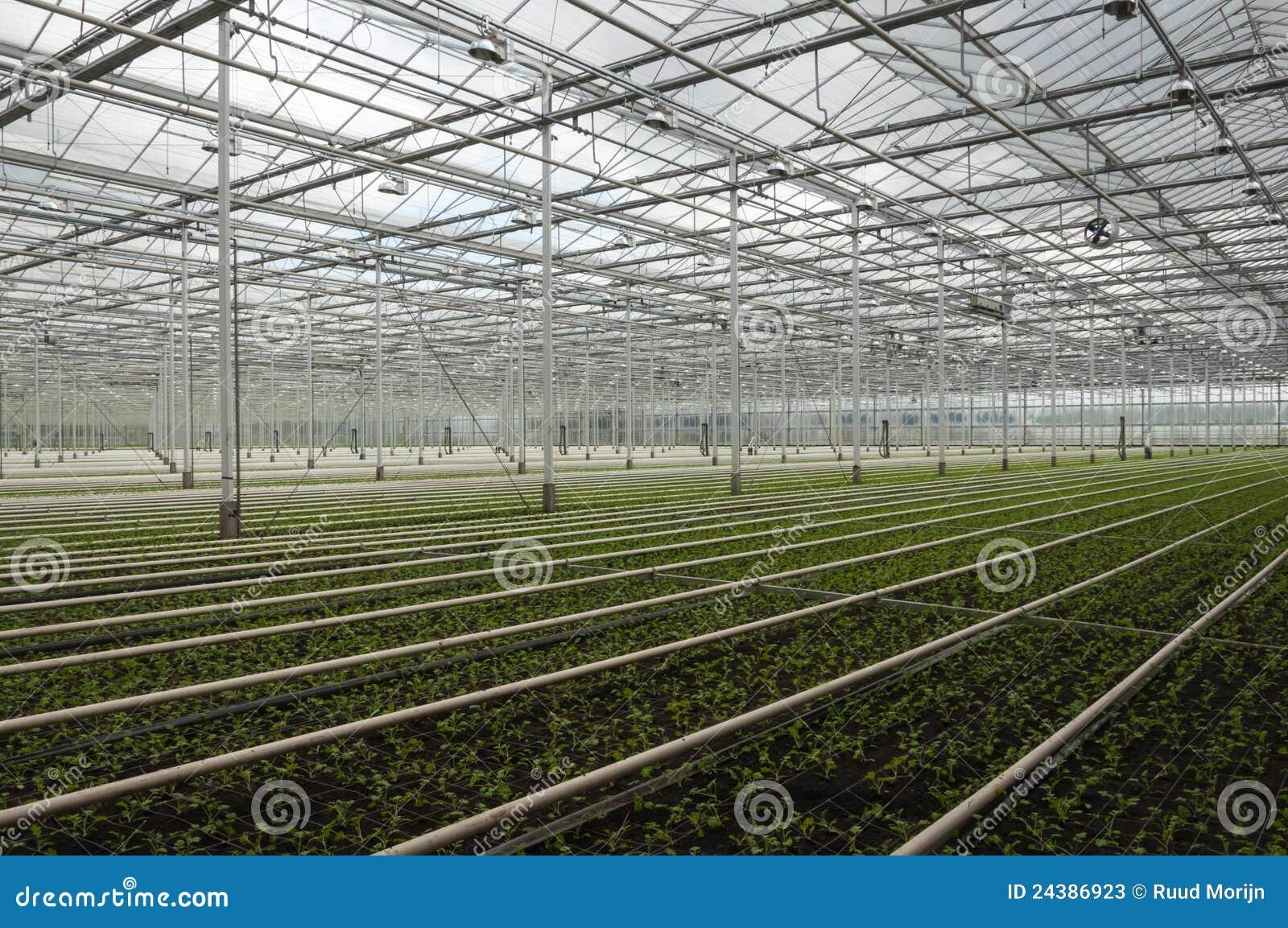 Piante complesse della serra olandese avanzata piccole for Piante acquisto