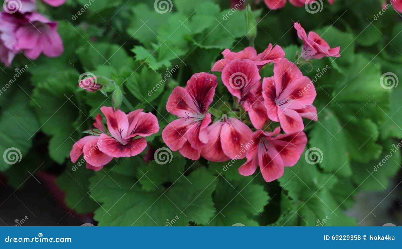 Pianta con fiori rossi bianchi e gialli best diamo un for Arbusto dai fiori rosa e bianchi