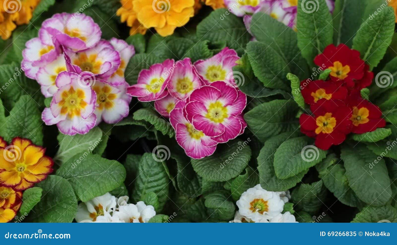 Piante da interno con fiori amazing immagine pianta - Piante da interno con fiori ...