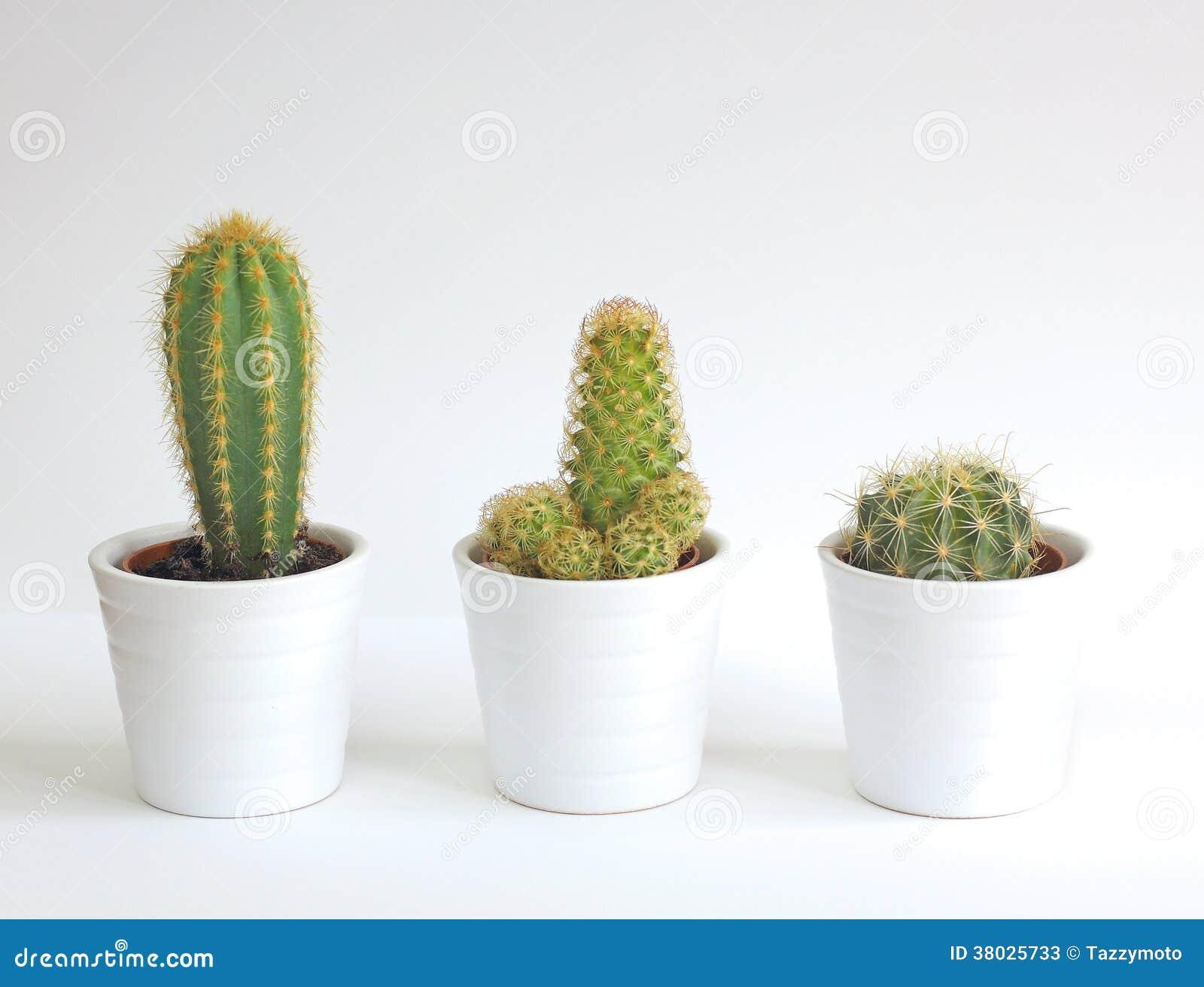 Piante da appartamento del cactus immagine stock - Cactus da interno ...