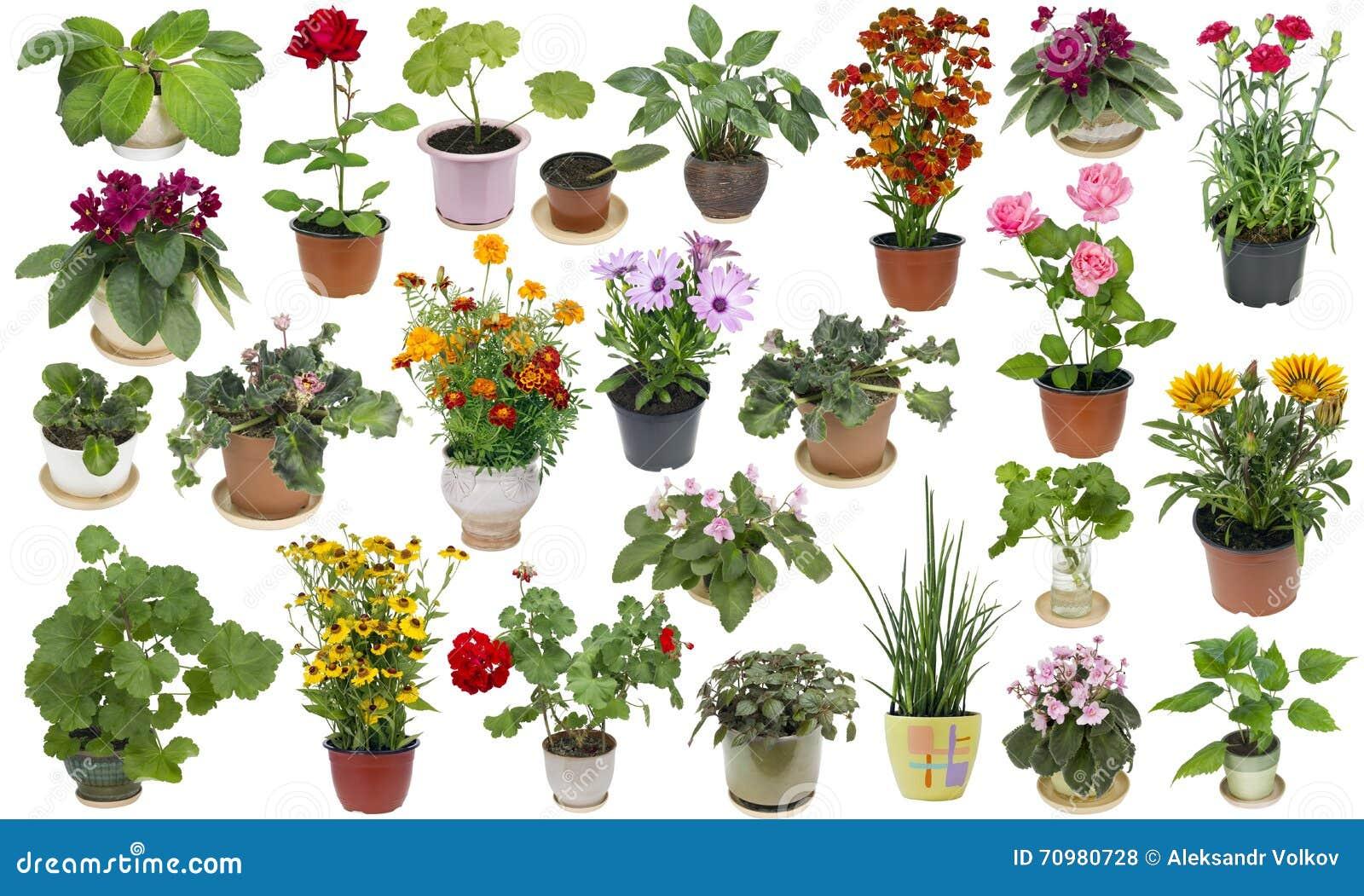 Piante da appartamento e fiori dell 39 interno messi for Piante e fiori da appartamento