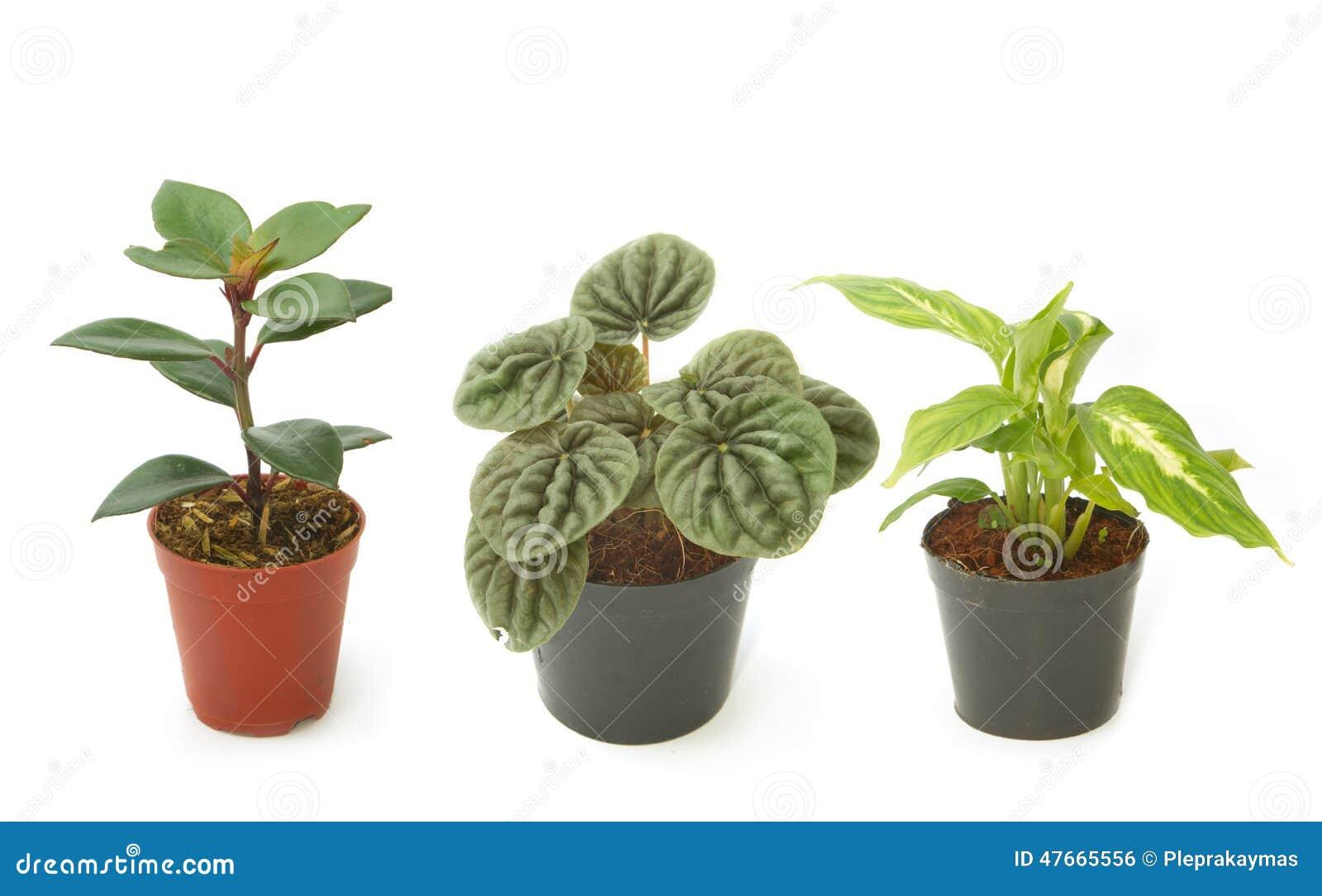 Piante da appartamento verdi assortite in vasi fotografia - Vasi ornamentali da interno ...