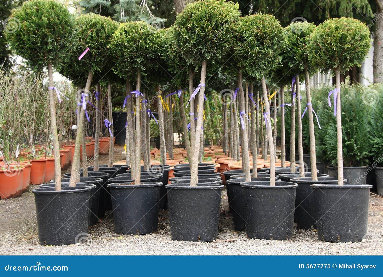 piante decorative immagine stock immagine di marche