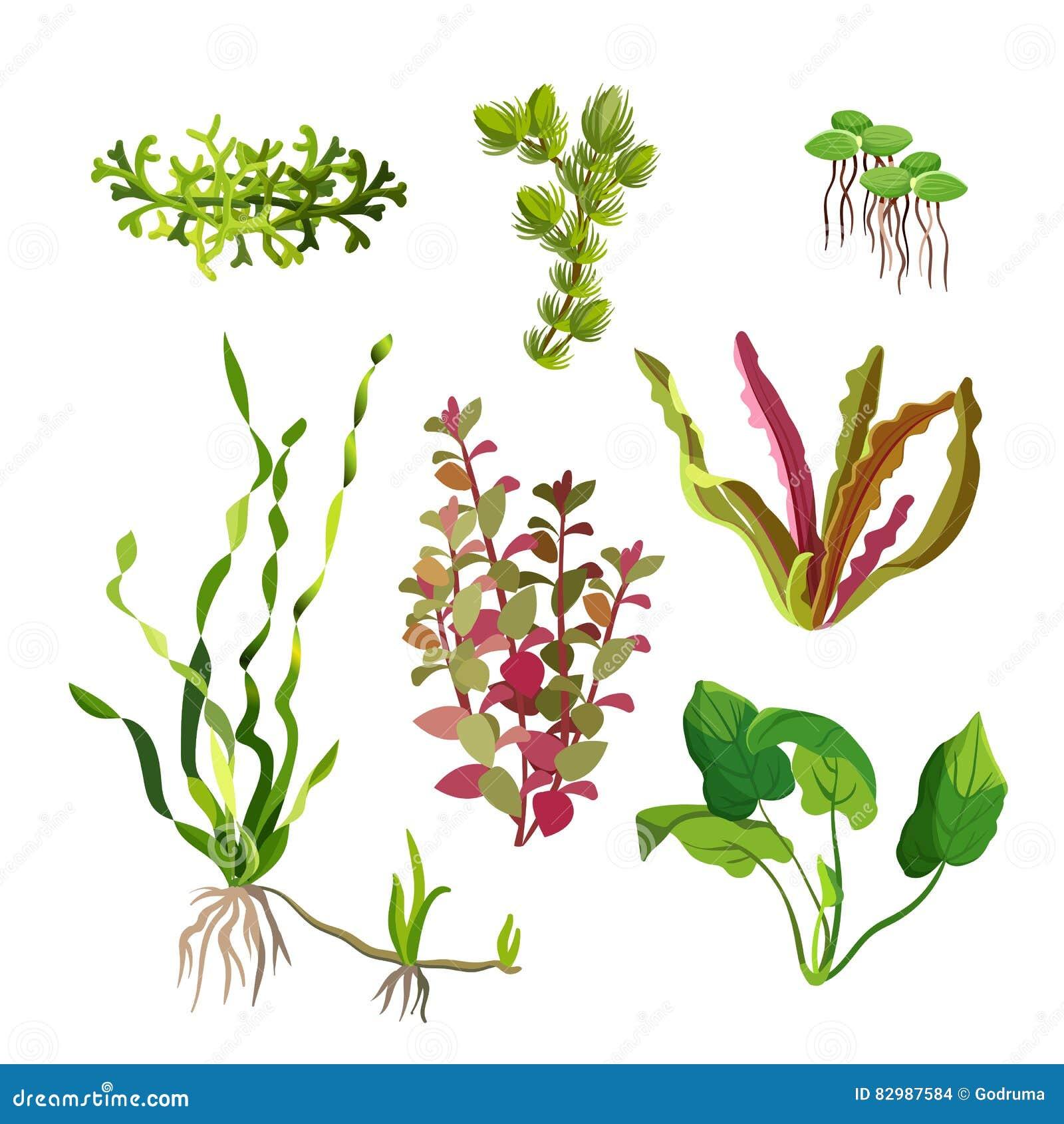 Piante dell acquario messe Alghe subacquee del fumetto Elementi naturali dell alga