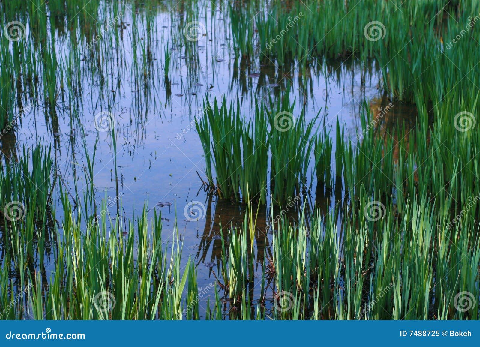 piante dello stagno immagine stock immagine di giardino
