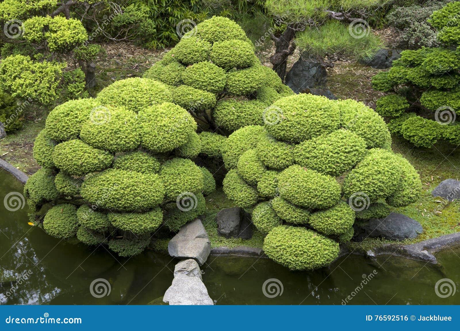 Piante di giardino giapponesi fotografia stock immagine for Piante belle da giardino