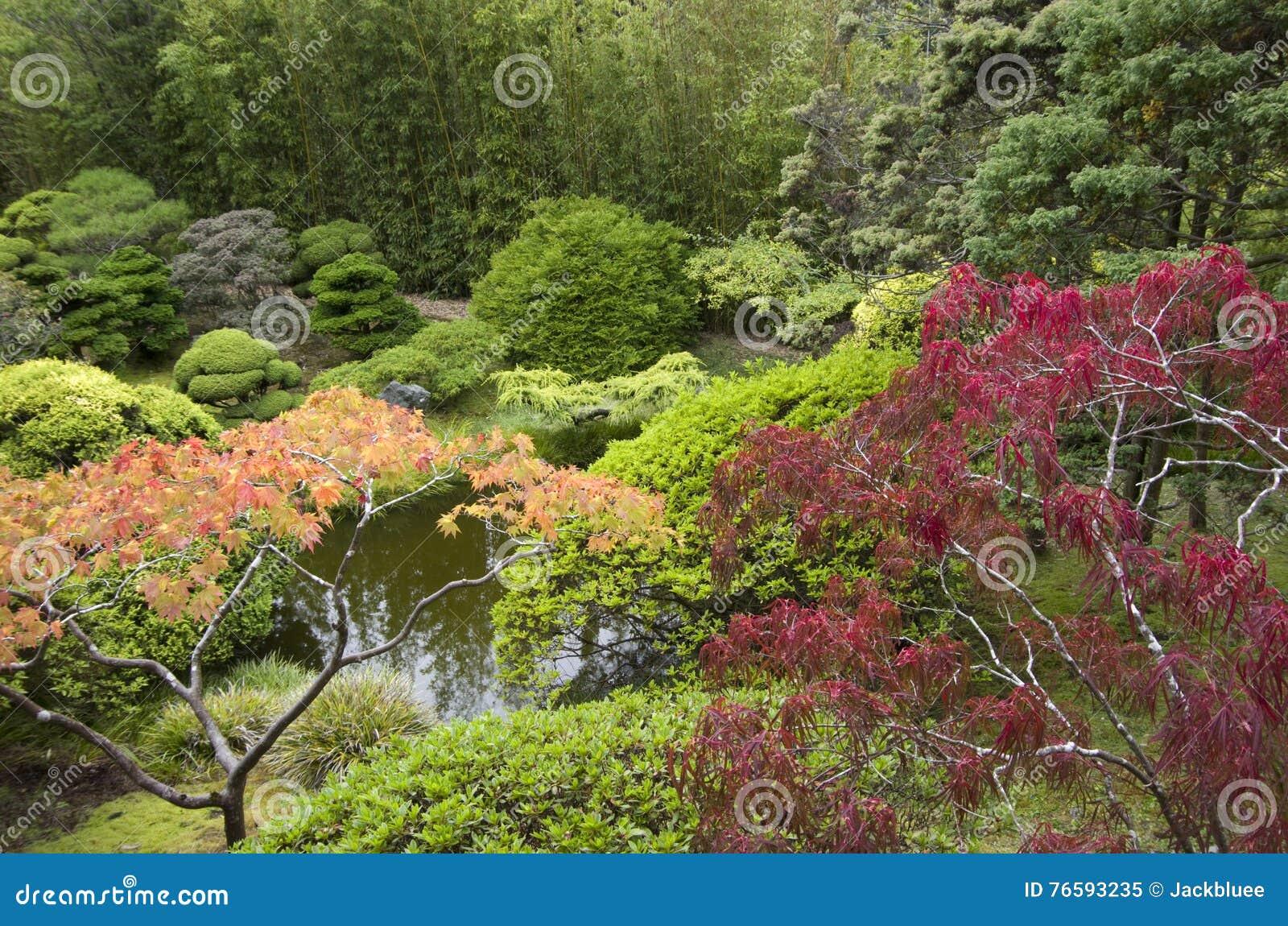 Piante di giardino giapponesi immagine stock immagine di for Piante belle da giardino
