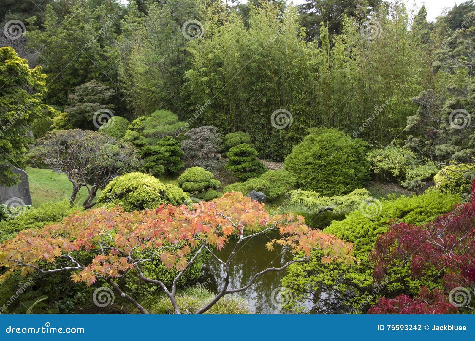 Piante di giardino giapponesi fotografia stock immagine for Piante di giardino