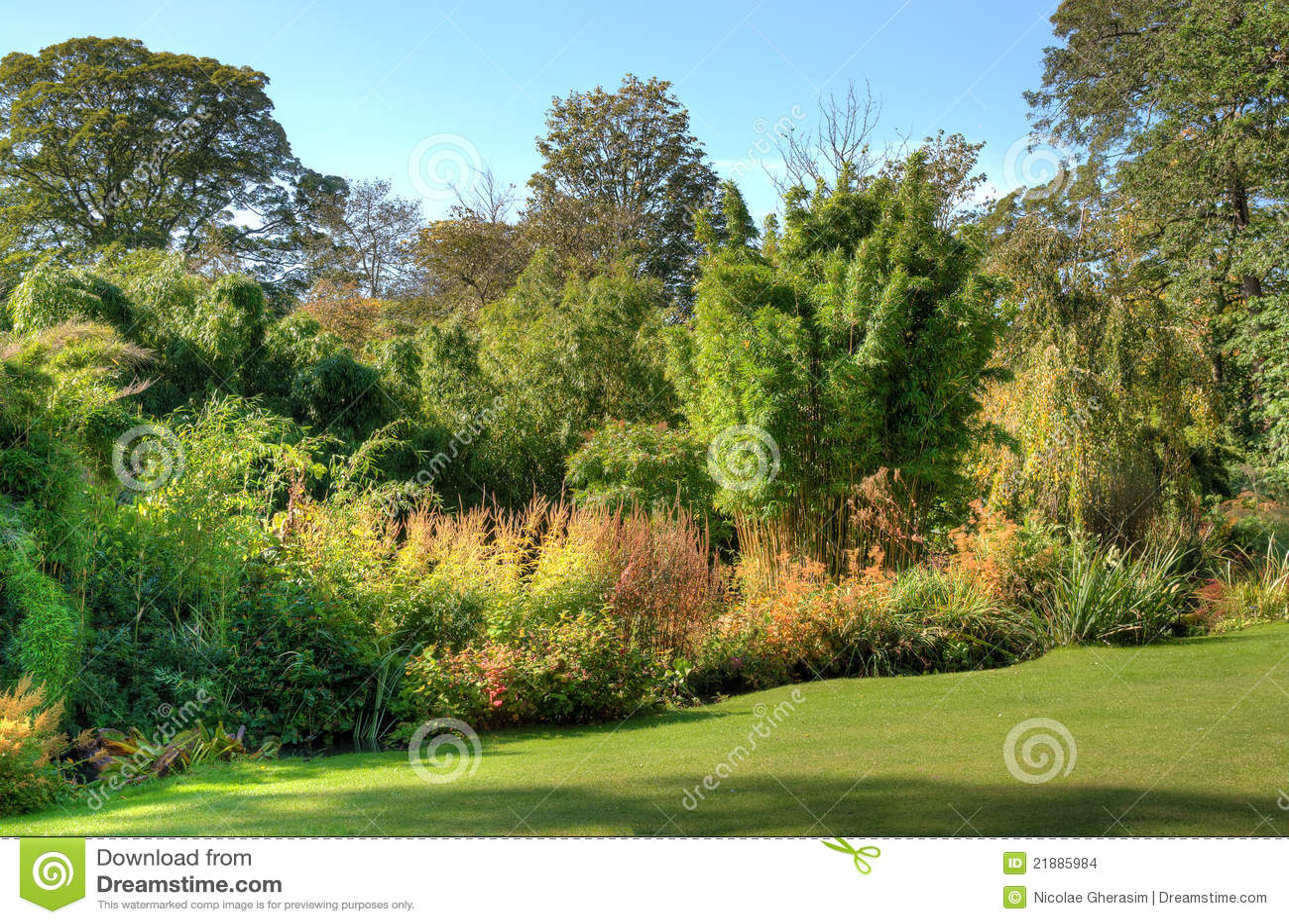 Piante e cespugli di giardino immagini stock immagine - Piante di giardino ...
