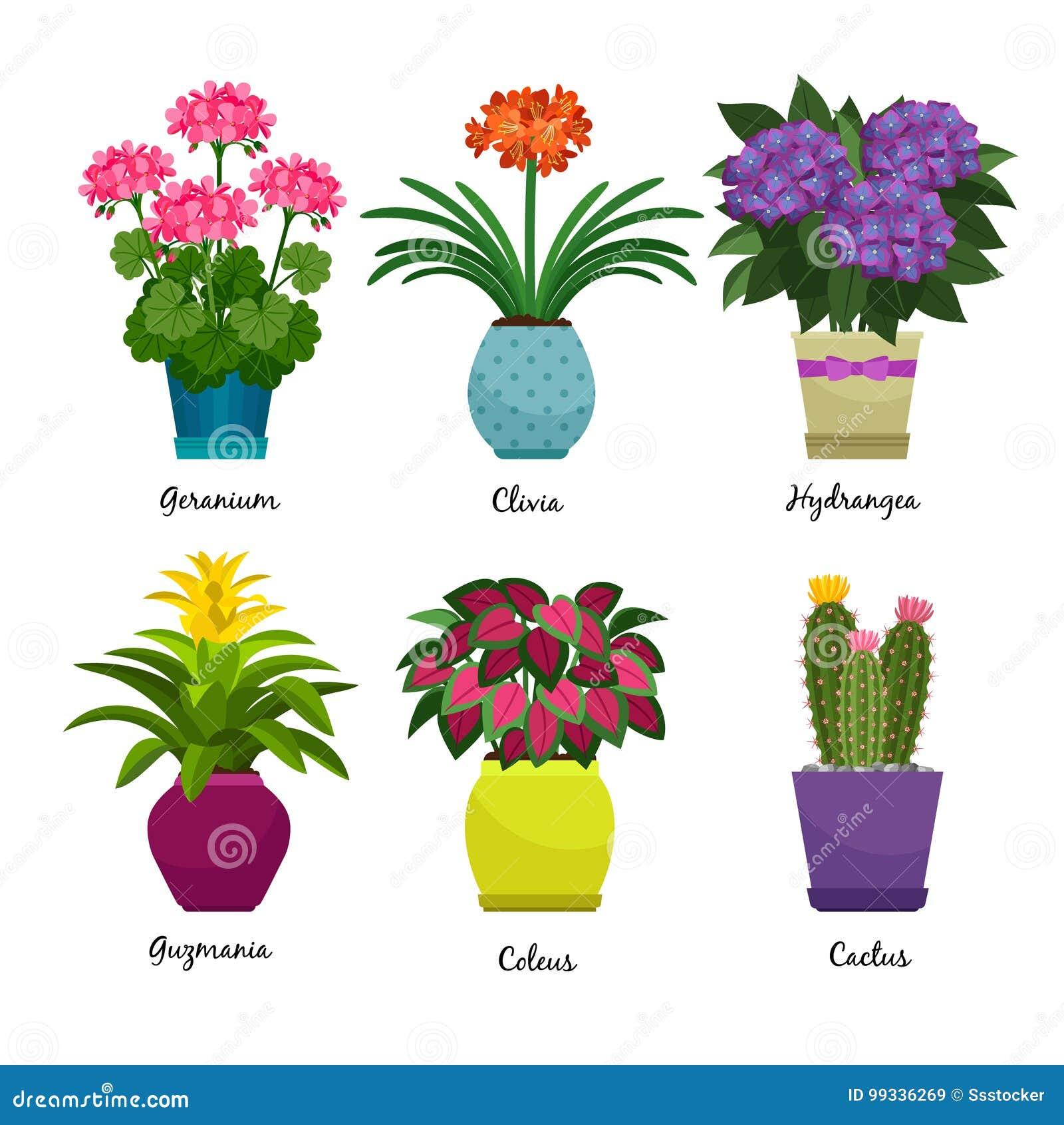 Piante E Fiori.Piante E Fiori Di Giardino Dell Interno Illustrazione Vettoriale