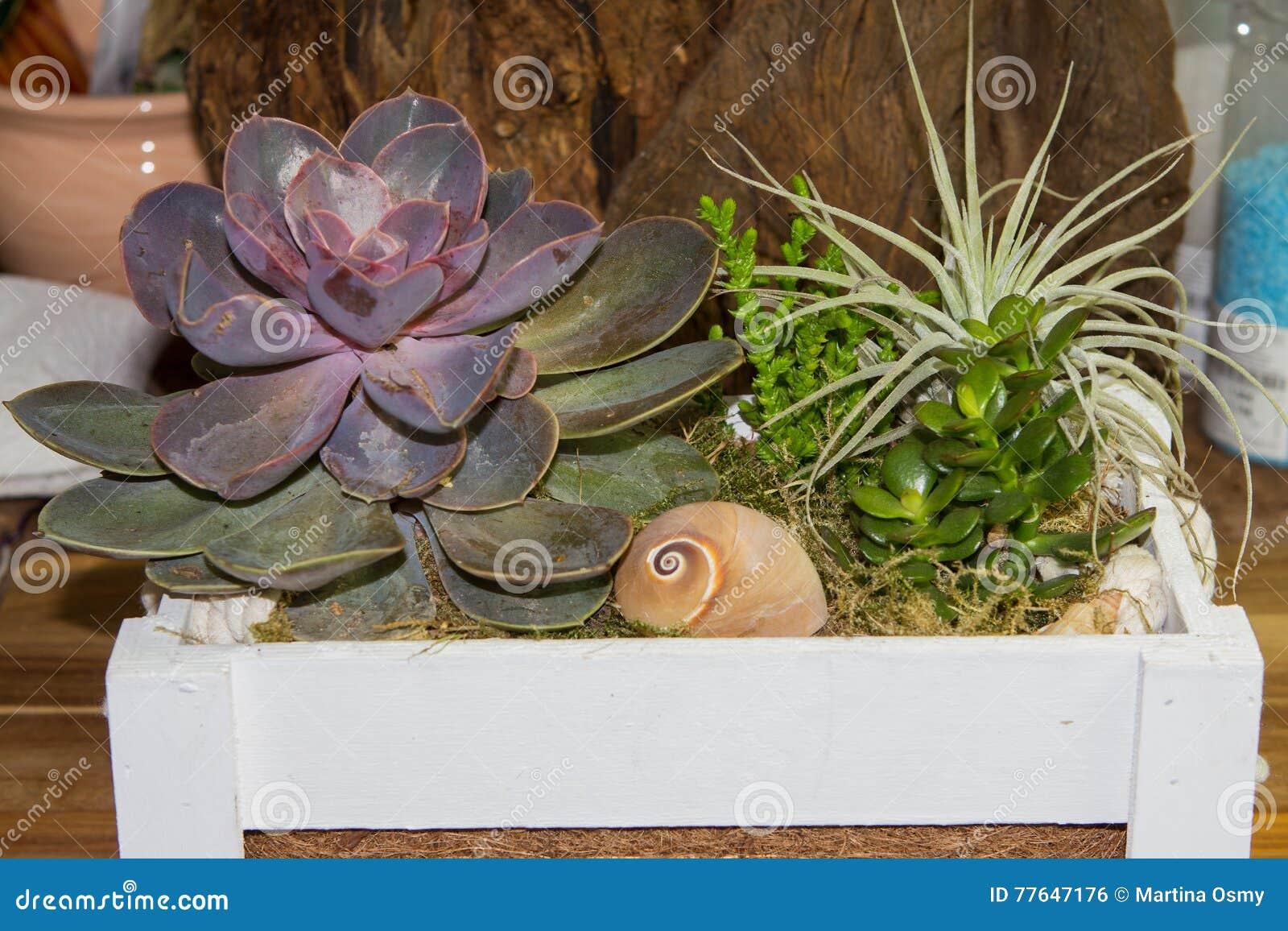 Piante Grasse Piccole Prezzi piante grasse in una scatola di legno fotografia stock