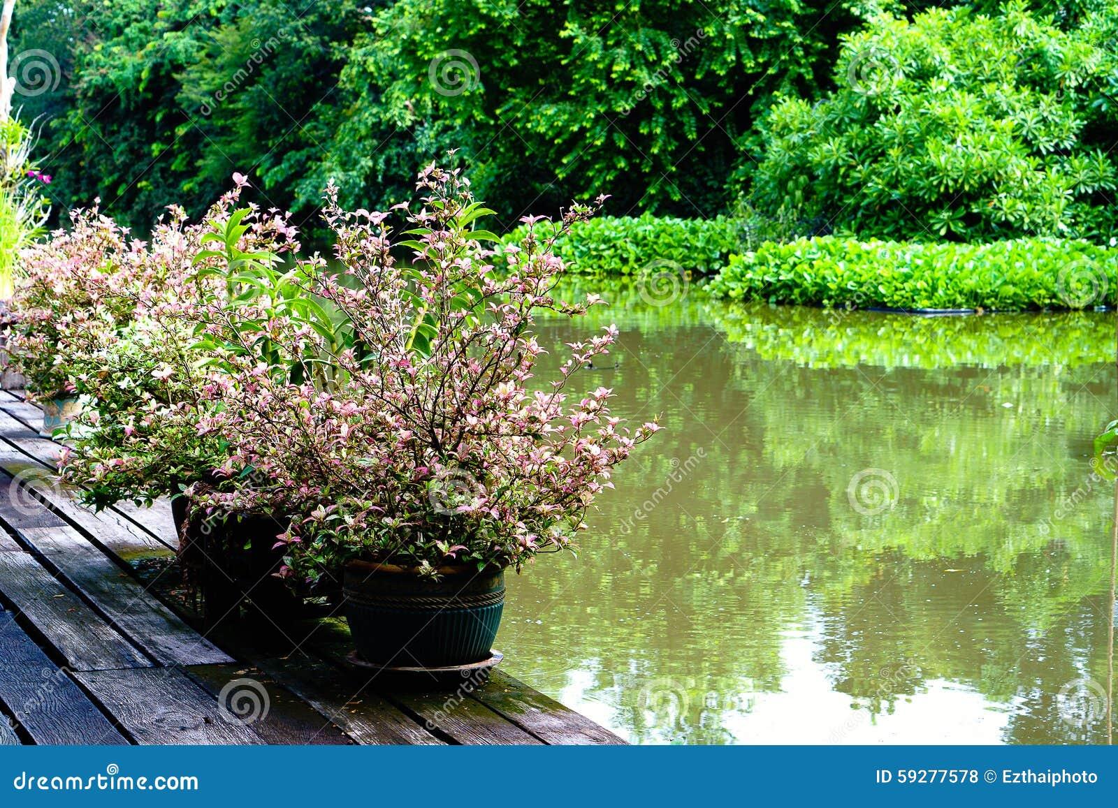 Decorazione Vasi Da Giardino : Piante porpora della foglia nella decorazione del vaso da fiori