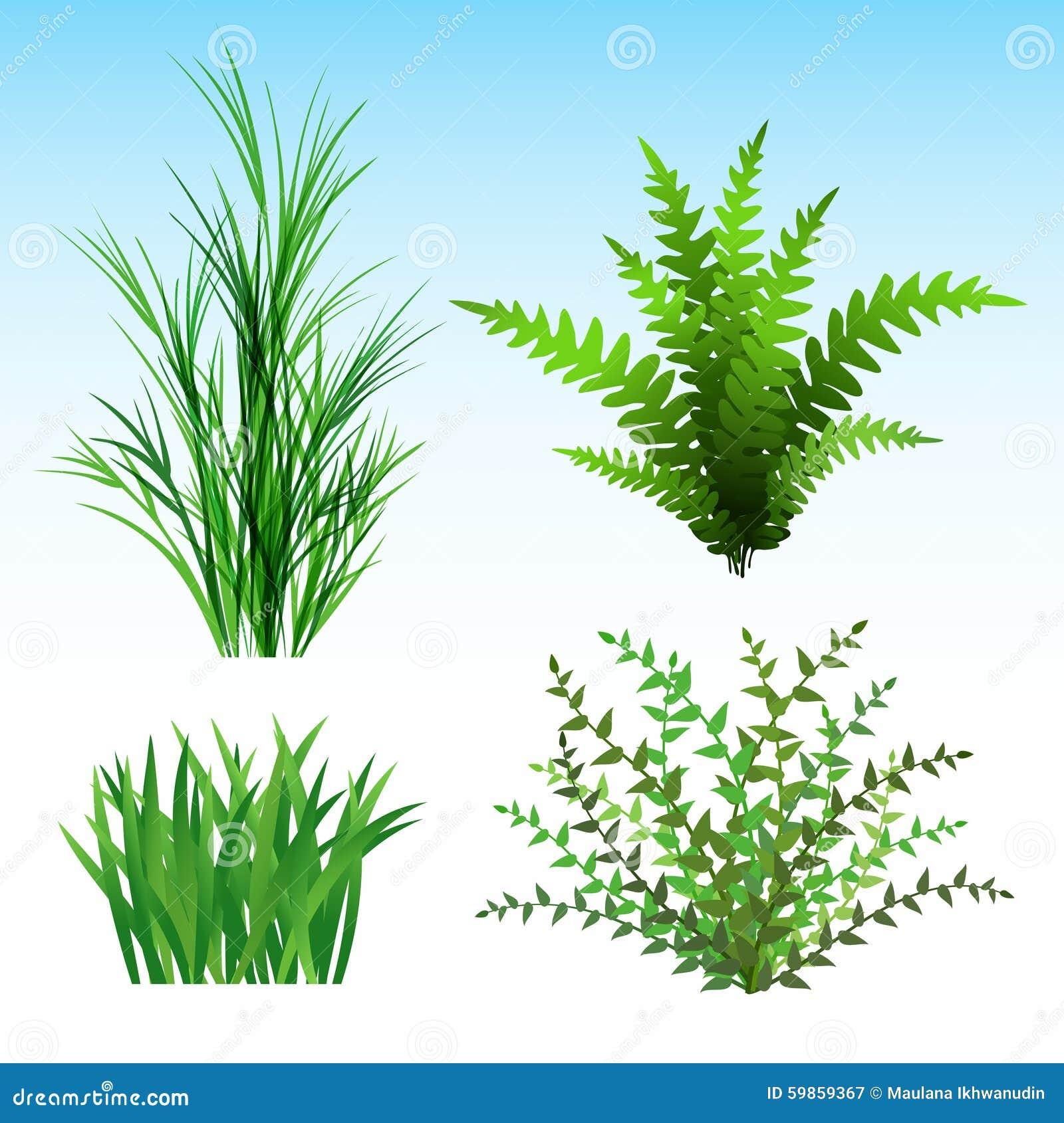 Piante selvatiche illustrazione vettoriale illustrazione for Piante di lamponi acquisto